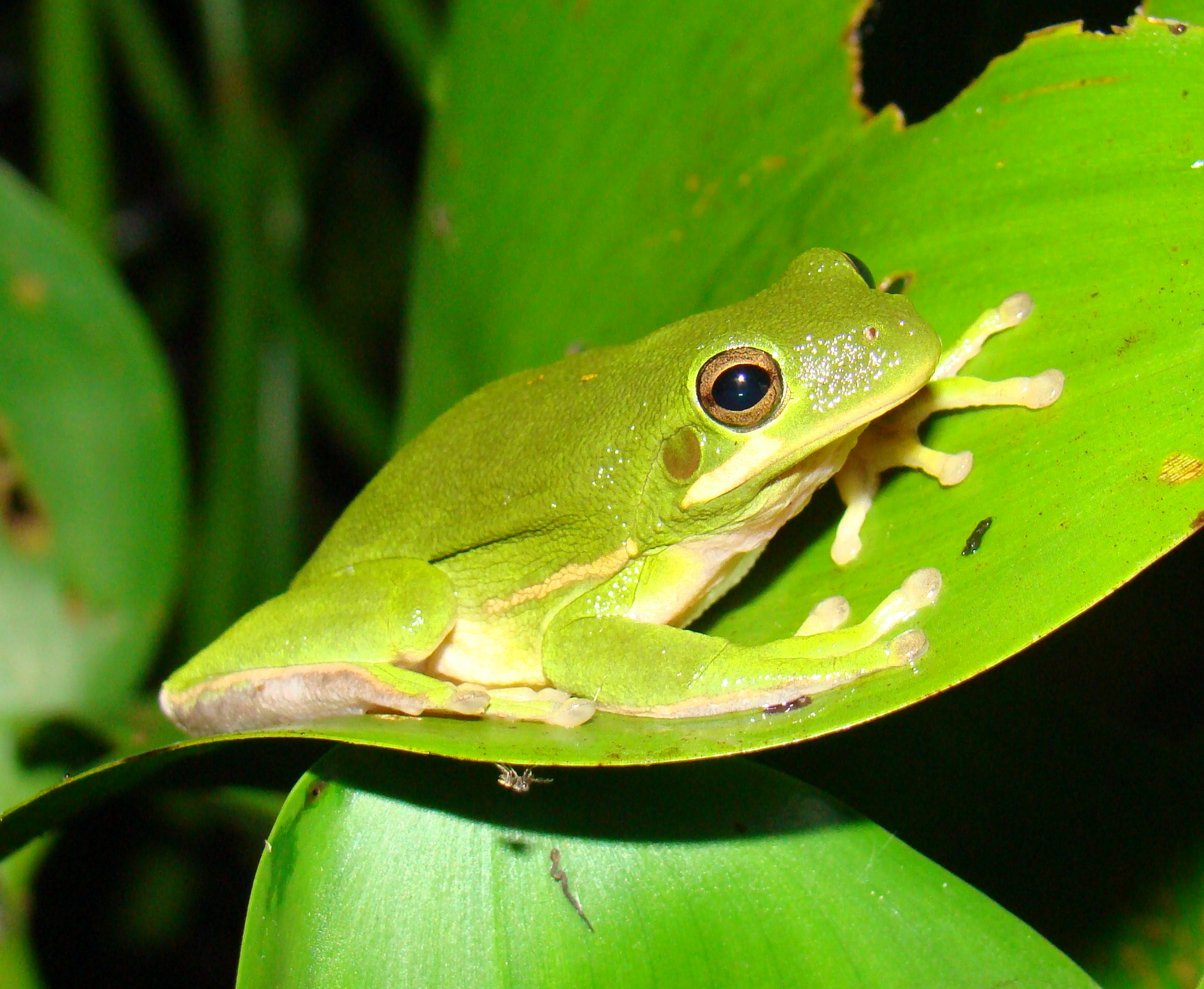 Related Keywords & Suggestions for names of amphibians florida