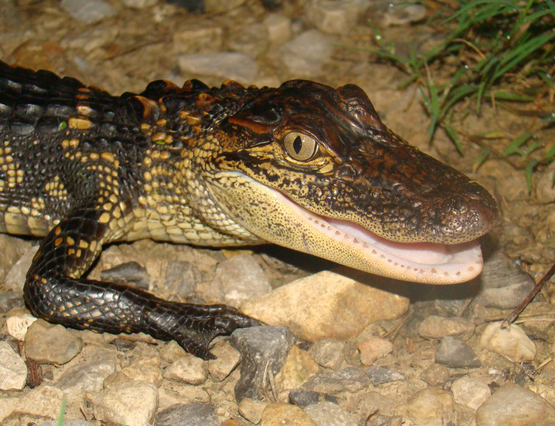 Image Gallery names reptiles and amphibians