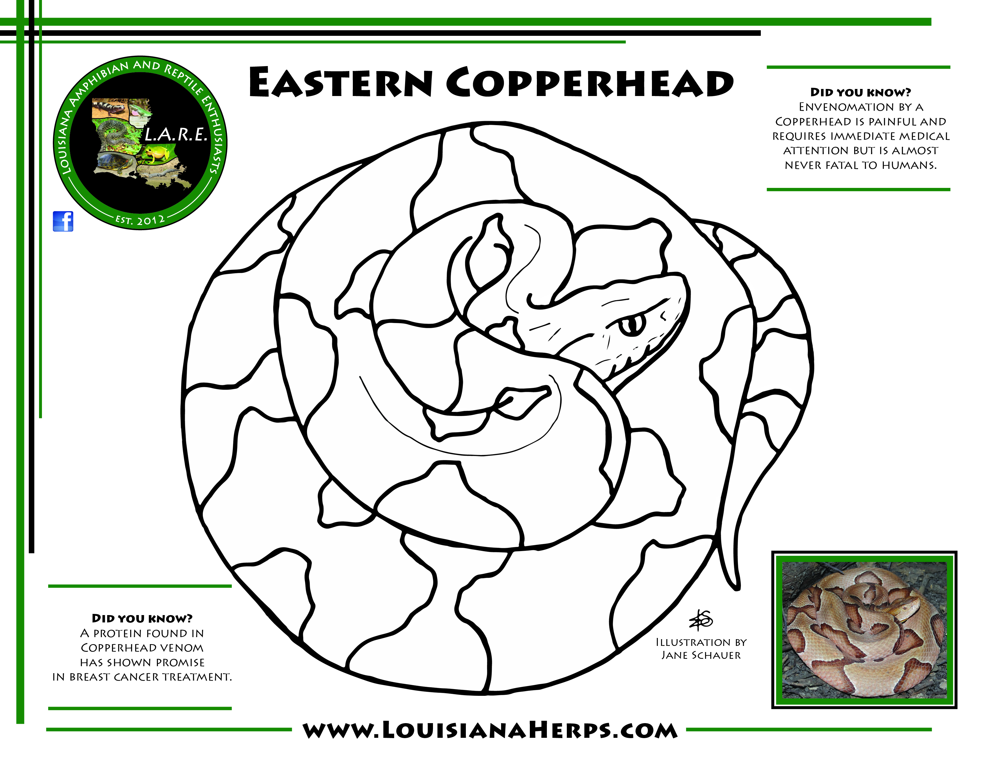 L A R E Coloring Pages Brad Glorioso S Personal Website Amphibians And Reptiles Of Louisiana