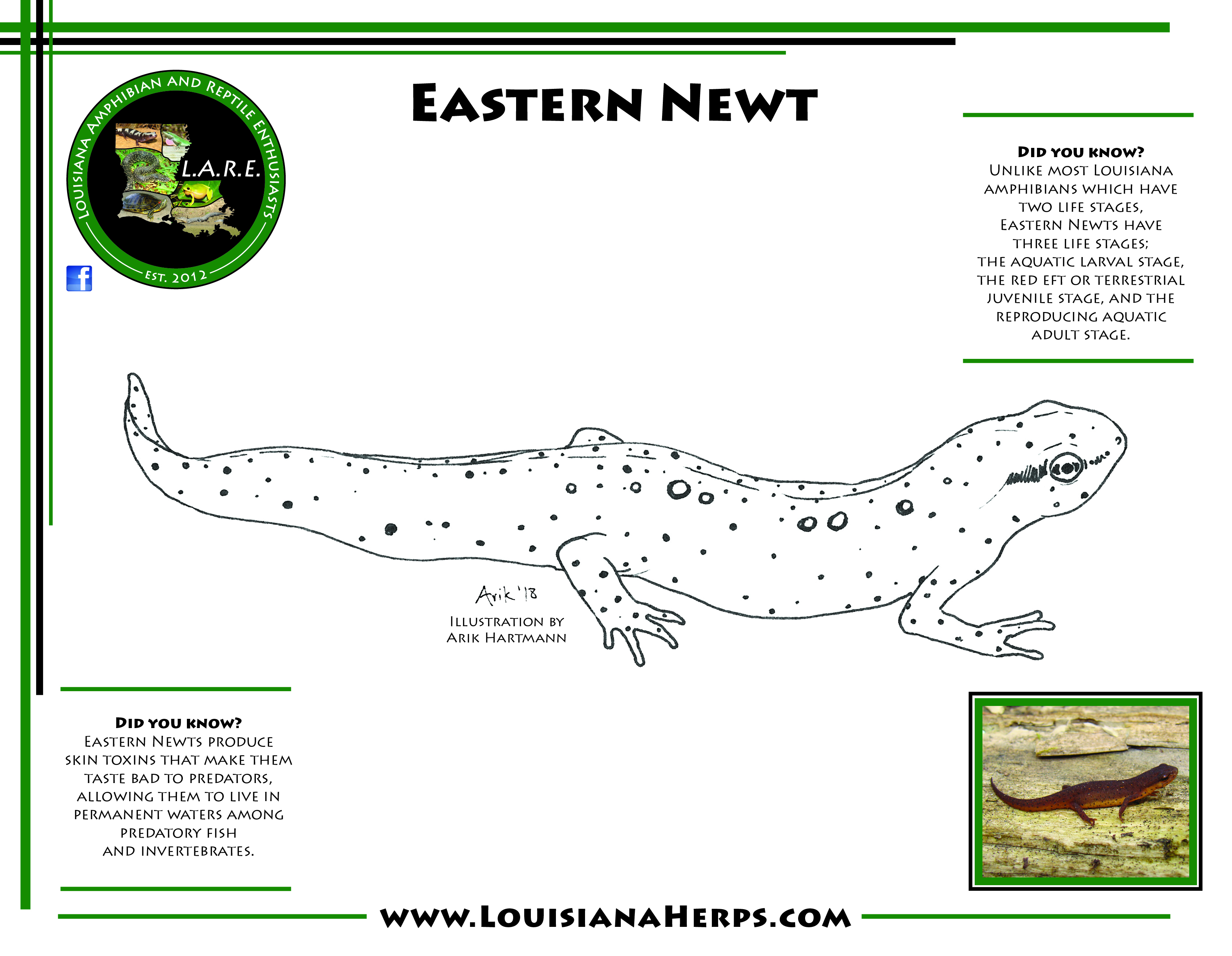 L.A.R.E. Coloring Pages | Amphibians and Reptiles of Louisiana