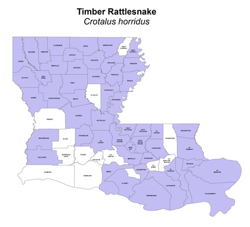Timber Rattlesnake Crotalus Horridus Amphibians And Reptiles - Map of rattlesnakes in us